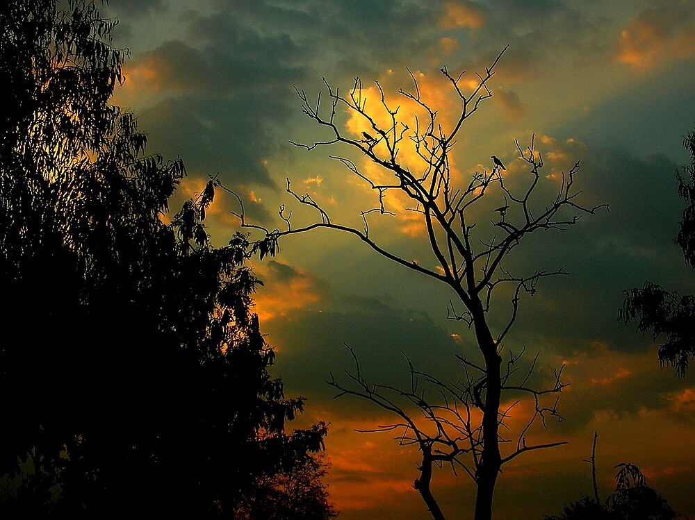 The bare tree with birds by nisheedhi