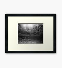 Woods Framed Print