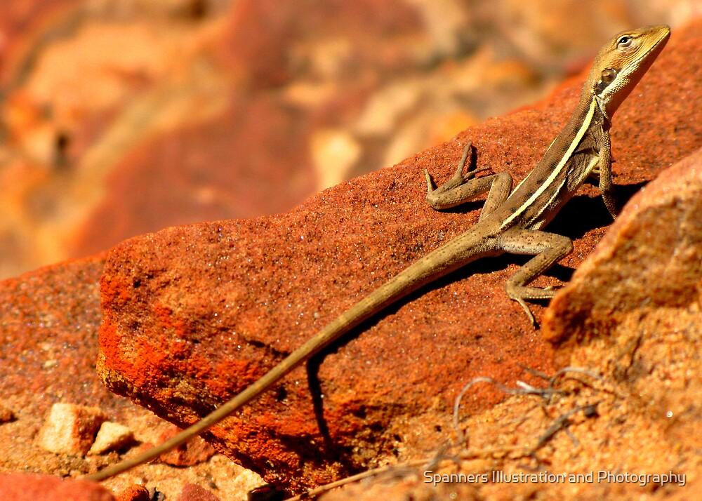 Lizard, Western Australia by spanners79
