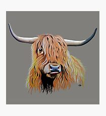 Cargill Coo Photographic Print