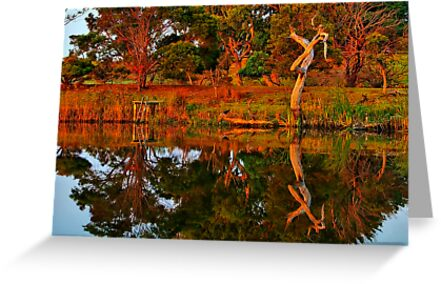"""""""Morning Reflections"""" by Phil Thomson IPA"""