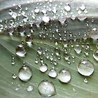 Raindrops on a leaf (colour) by Tony Blakie