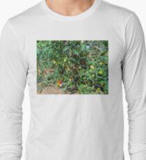 garden tomato plant 2 06/29/17 Long Sleeve T-Shirt