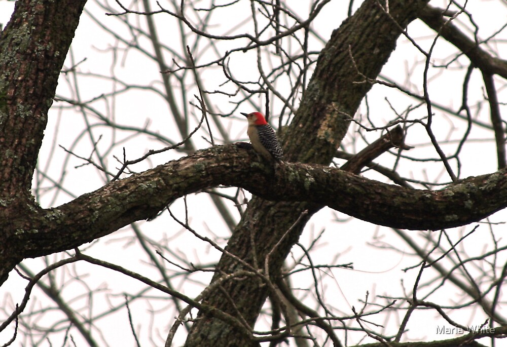 Woodpecker in the Holler by Maria White