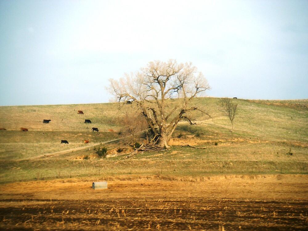Iowa Landscape by bangogirl