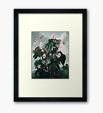 The Oblique-Leaved Begonia - The Temple of Flora Framed Print