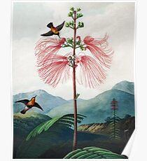 Große blühende empfindliche Pflanze - der Tempel der Flora Poster