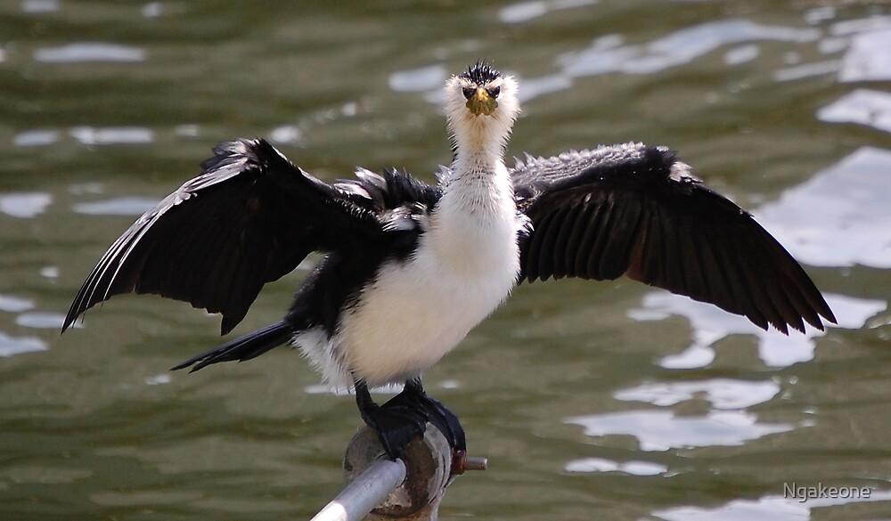 Shag on the banks of the Yarra by Ngakeone