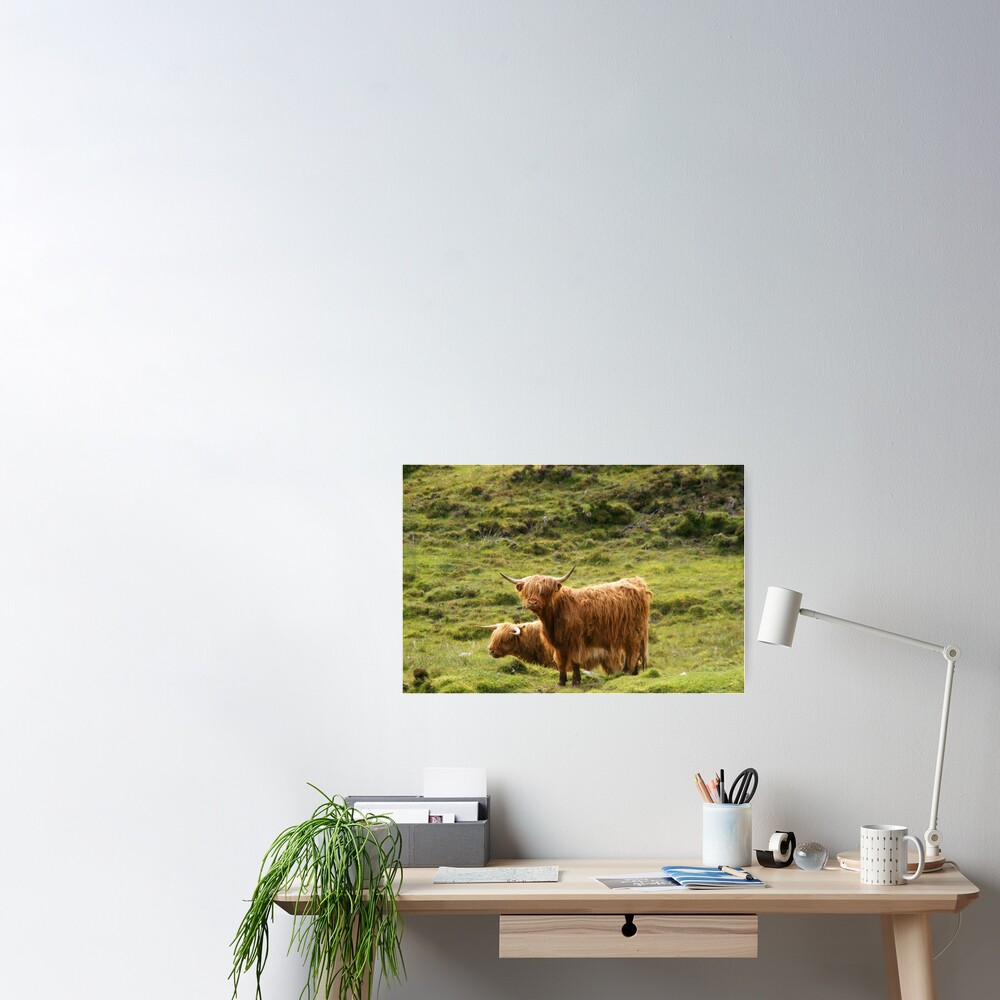 Scottish Highland Cows Poster