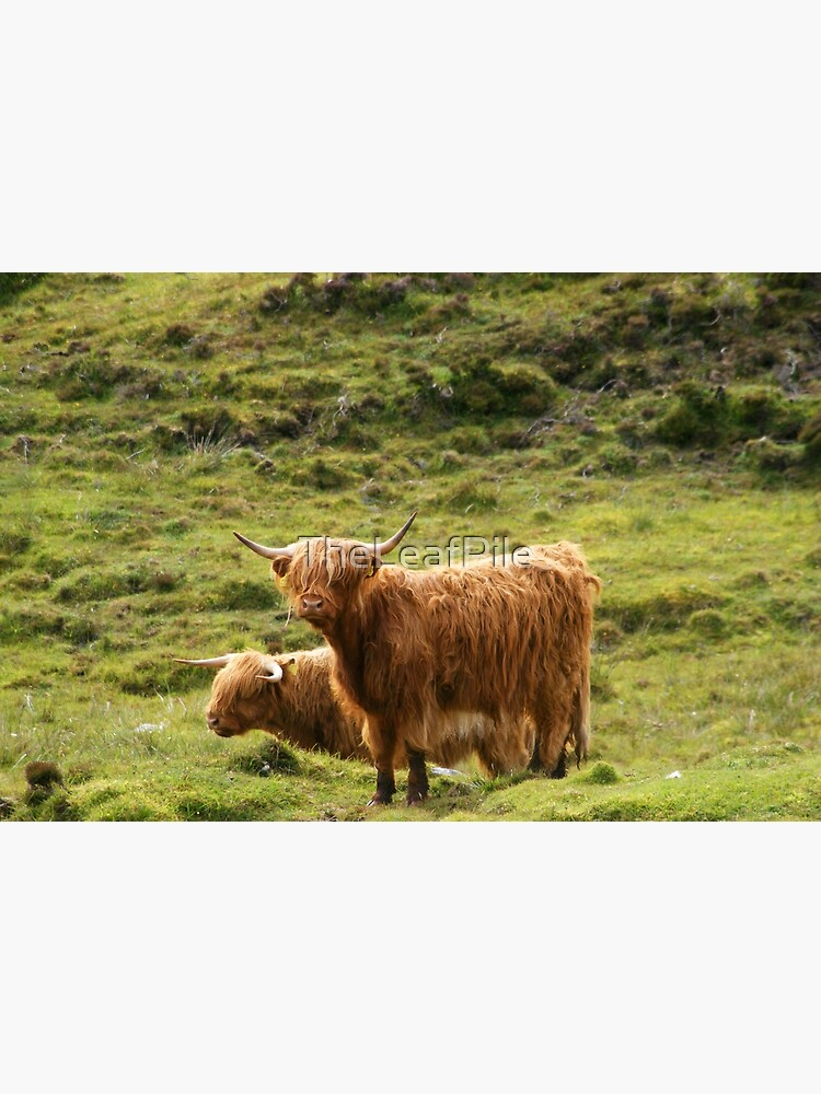 Scottish Highland Cows by TheLeafPile
