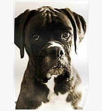 Luthien's Portrait In Sepia -Boxer Dogs Series- Poster