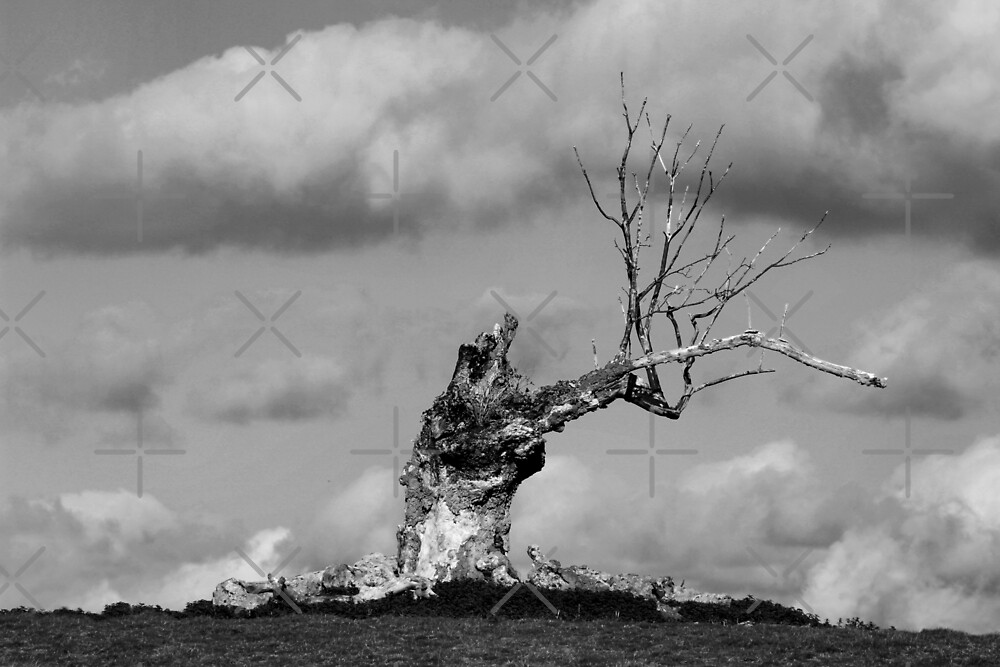 Dead Wood by Yampimon