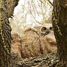 Look the other way by Heather King