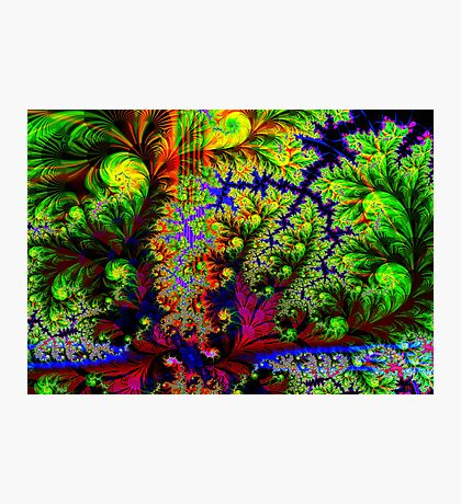 Tropical Forest Photographic Print