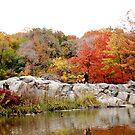 Central Park - Autumn by jookboy