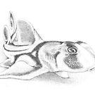 Baby Port Jackson shark ink drawing - Heterodontus portusjacksoni by John Turnbull