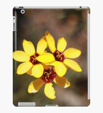 Ixia Maculata (Spotted African Corn Lily) iPad Case/Skin