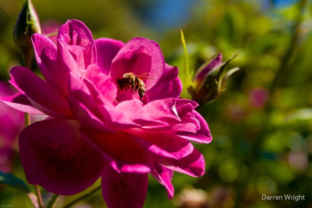 Bees Make Honey... by Darren Wright