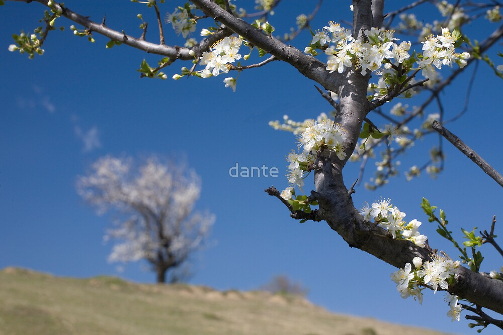 The beginning of life  by dante