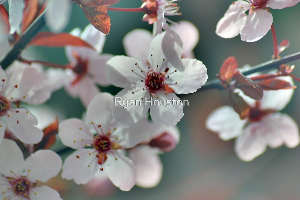 Spring Chill by Ryan Houston