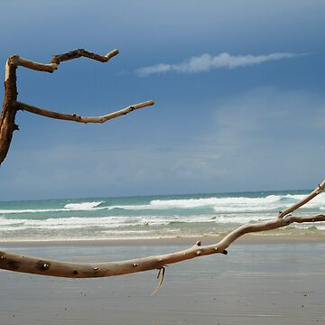 Tree on the beach by grazgar