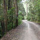 Road to Thumb Creek by Kylie  Metz