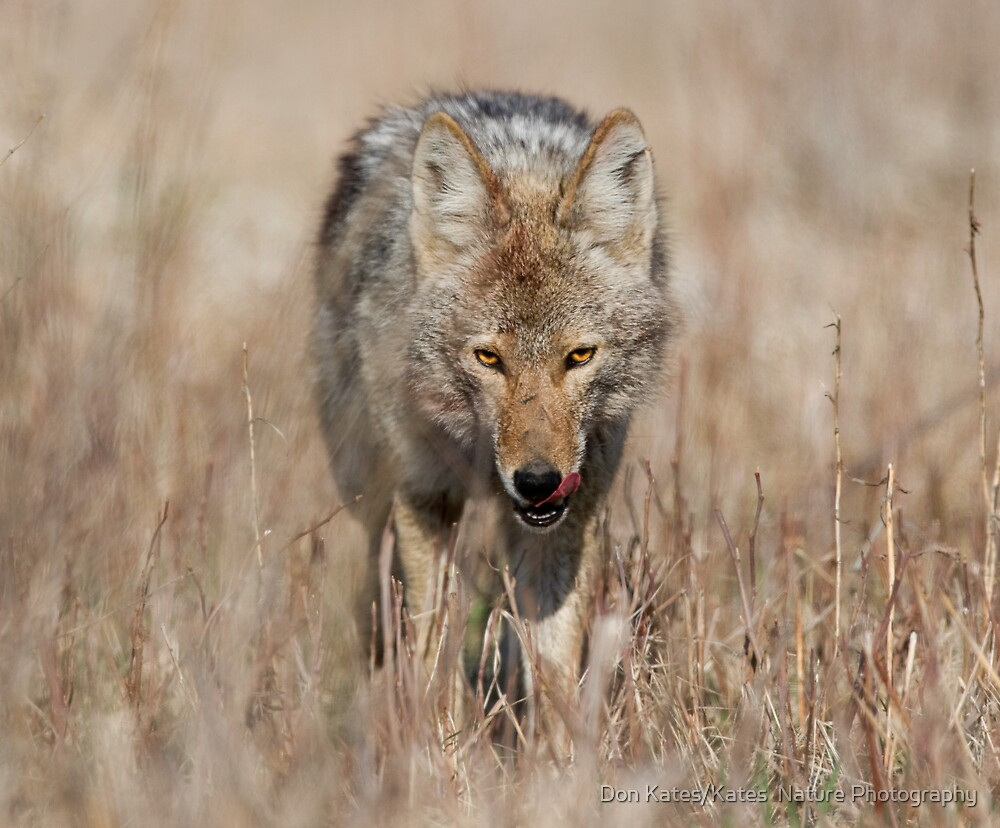 The Look by Don Kates/Kates  Nature Photography