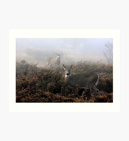 The rut is on! - White-tailed deer in fog Art Print