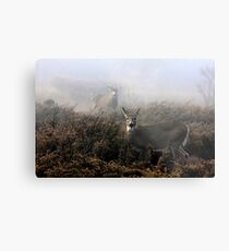 The rut is on! - White-tailed deer  Metal Print
