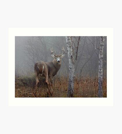 Buck - White-tailed deer Art Print