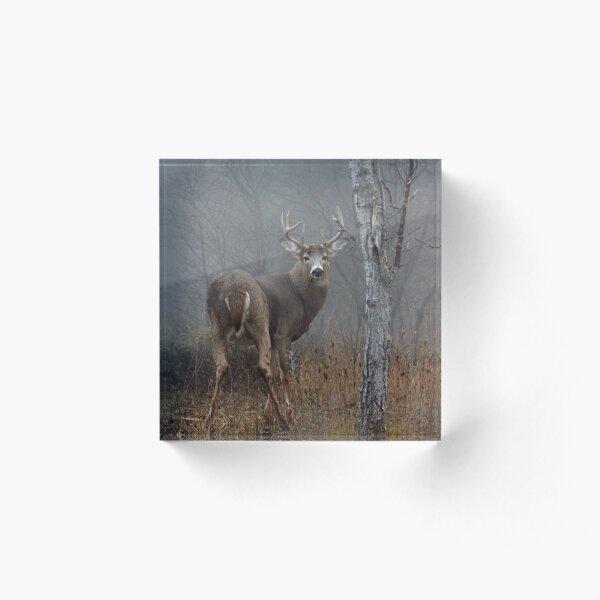 Buck - White-tailed deer Acrylic Block