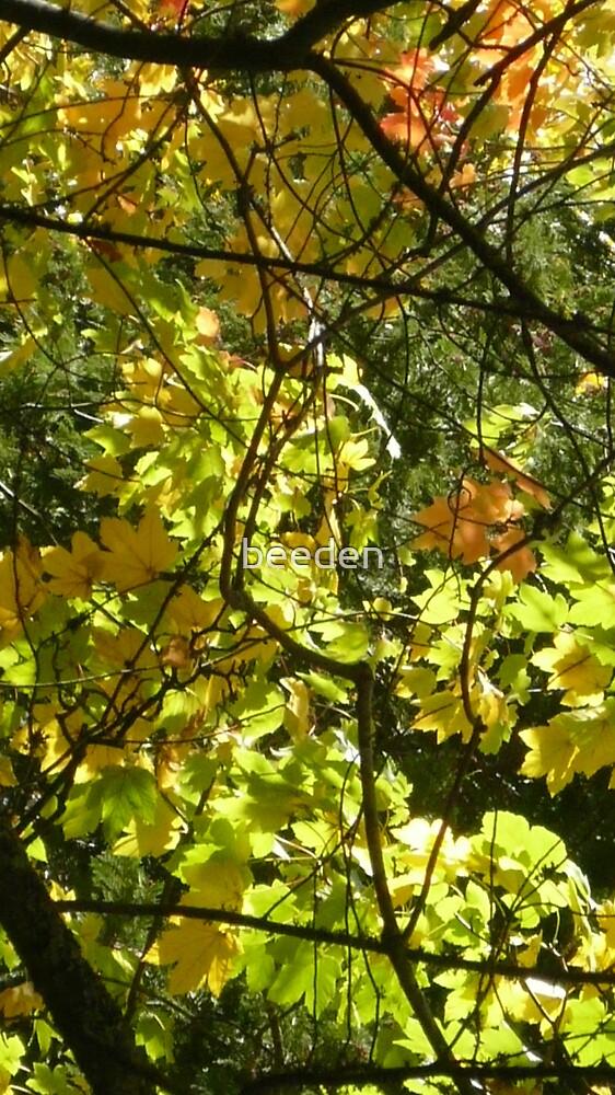 Australian Autumn by beeden