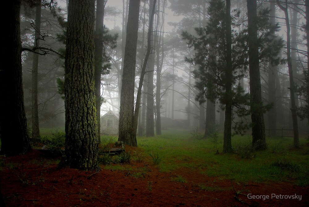 Pine Forest Mists by George Petrovsky