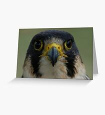 Falcon Face Greeting Card