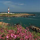 Buchan Ness Lighthouse and Spring flowers by Maria Gaellman