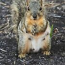 OOPS! Dropped My Nut!  by Heather Friedman