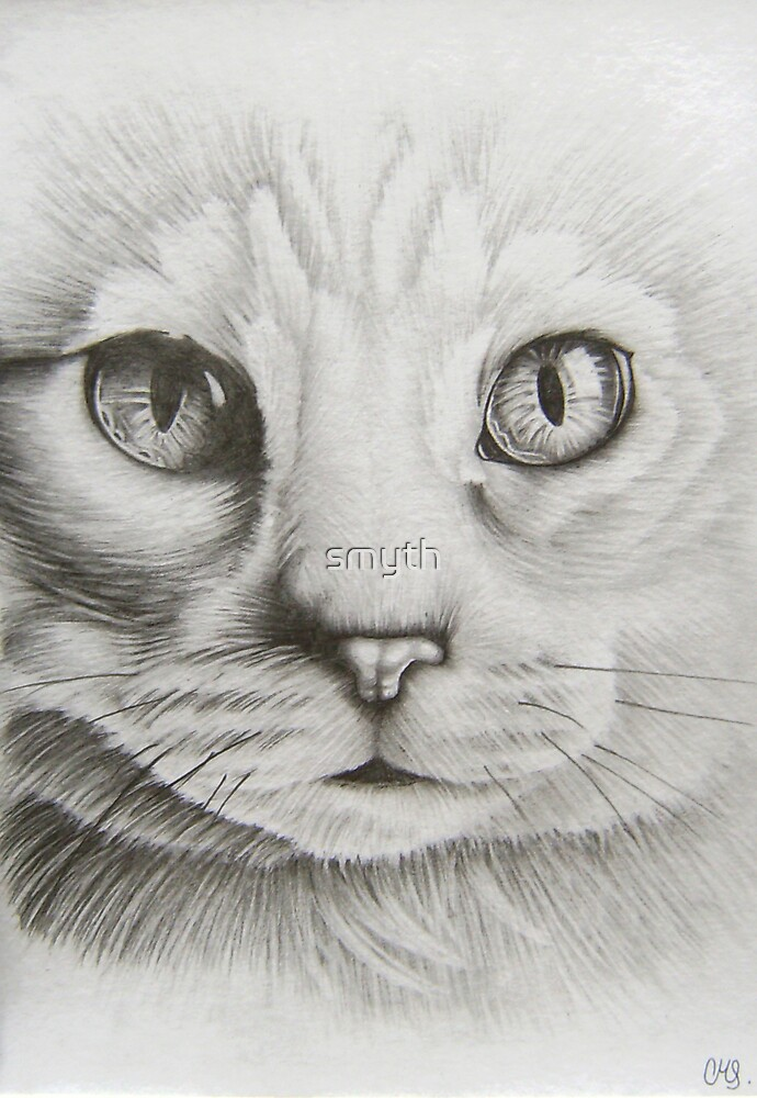 cats eyes by craig smith