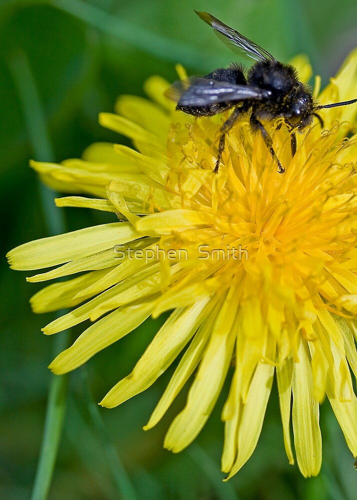 Buzzing by Stephen  Smith