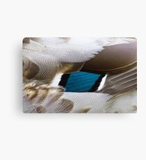 Duck feathers Canvas Print