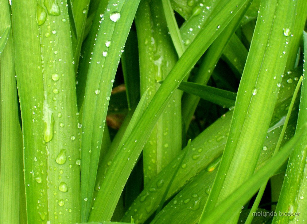 rain drops by melynda blosser