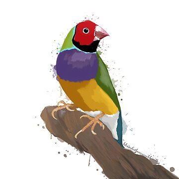 Gouldian Finch in Watercolour by EloisaRelish