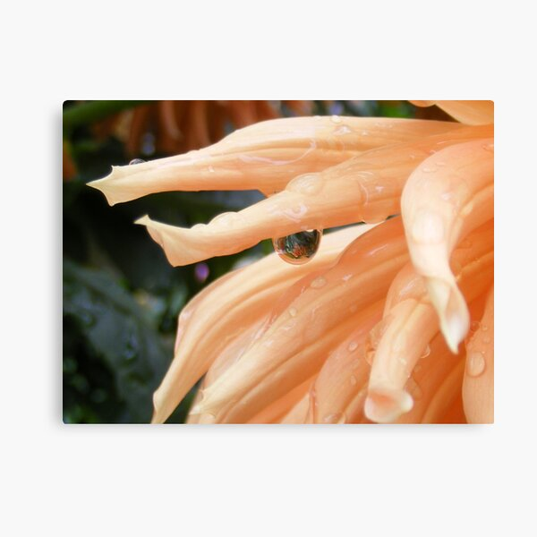 Tears Of a Flower Canvas Print
