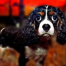 Cocker Puppy For Sale by Mark Ross