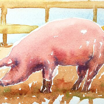 Pig in mud - Vibrant Watercolor painting  by tallbridgeguy