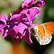 Butterfly or Caterpillar on a flower