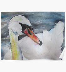 Royal Swan 2 Poster