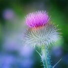 Party Time Thistle by Anita Pollak