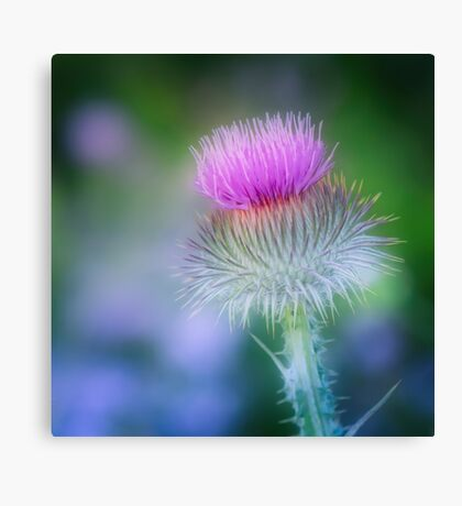 Party Time Thistle Canvas Print