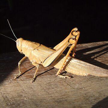 *bows* Grasshopper by artforsoul
