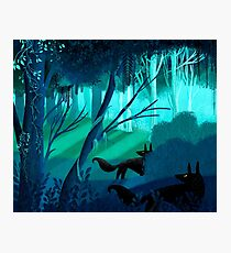 Shadow Wolves Stalk The Silver Wood Photographic Print
